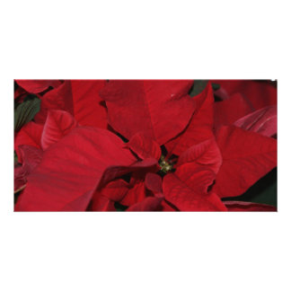 Red Poinsettia Picture Card