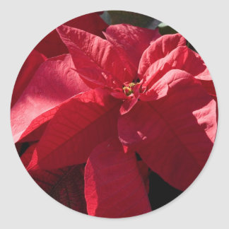 Red poinsettia Stickers