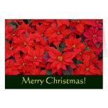 Red Poinsettias Christmas Card (Blank Inside)
