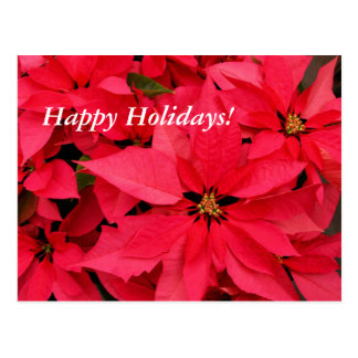 Red Poinsettias Happy Holidays Post Cards