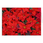 Red Poinsettias I Christmas Holiday Floral Photo Card