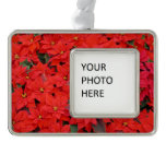 Red Poinsettias I Christmas Holiday Floral Photo Christmas Ornament