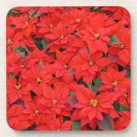 Red Poinsettias I Christmas Holiday Floral Photo Coaster