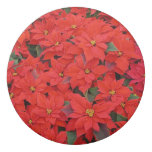 Red Poinsettias I Christmas Holiday Floral Photo Eraser