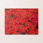 Red Poinsettias I Christmas Holiday Floral Photo Jigsaw Puzzle