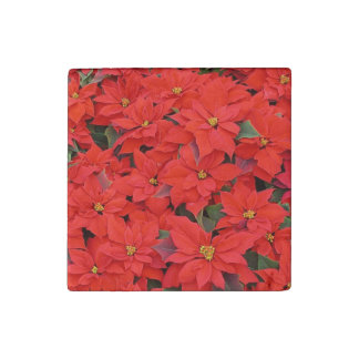 Red Poinsettias I Christmas Holiday Floral Photo Stone Magnet