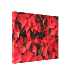 Red Poinsettias II Pretty Christmas Holiday Floral Canvas Print