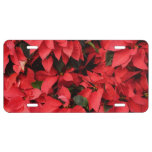 Red Poinsettias II Pretty Christmas Holiday Floral License Plate