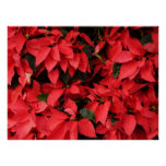 Red Poinsettias II Pretty Christmas Holiday Floral Poster