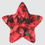 Red Poinsettias II Pretty Christmas Holiday Floral Star Sticker