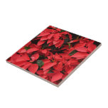 Red Poinsettias II Pretty Christmas Holiday Floral Tile