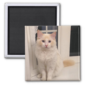 Red Point Ragdoll Cat - Sitting Pretty Magnet