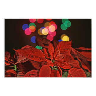 Red Pointsettia and Bright Colored Lights Photo Print