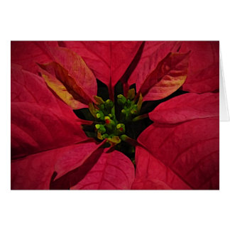 Red Pointsettia Thank You Card