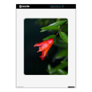 Red pomegranate flower (Punica granatum) on a tree iPad Decal