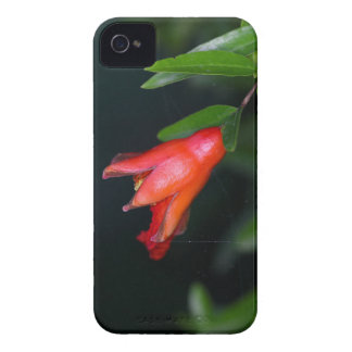 Red pomegranate flower (Punica granatum) on a tree iPhone 4 Case-Mate Case