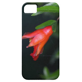 Red pomegranate flower (Punica granatum) on a tree iPhone SE/5/5s Case