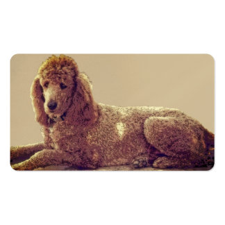 RED POODLE AT EASE Double-Sided STANDARD BUSINESS CARDS (Pack OF 100)