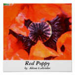 Red Poppie Poster