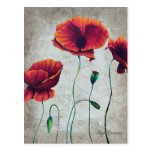 Red Poppies 2 Postcard