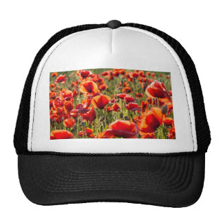 Red poppies on a canola field trucker hat
