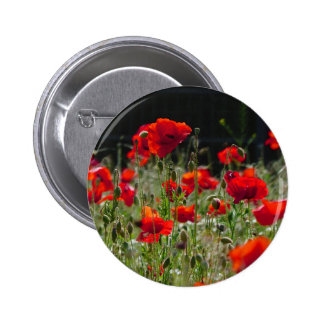 Red Poppies / poppy field  /  Roter Mohn Button