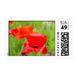 Red Poppies postage stamps Oriental Poppy Flower
