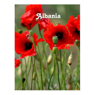 Red Poppies Postcard