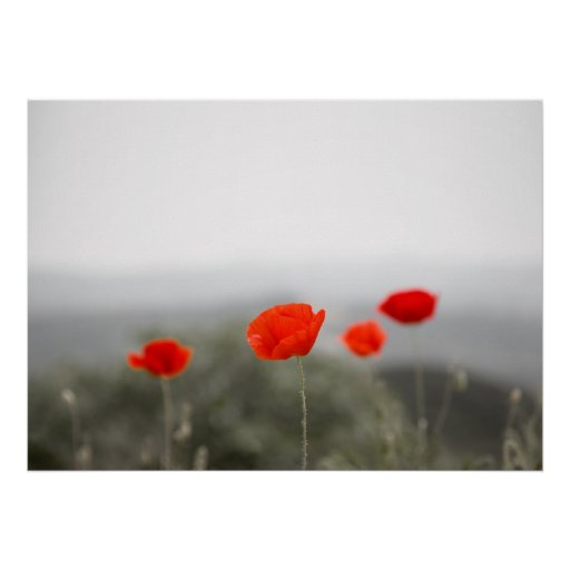 Red poppies poster/canvas print