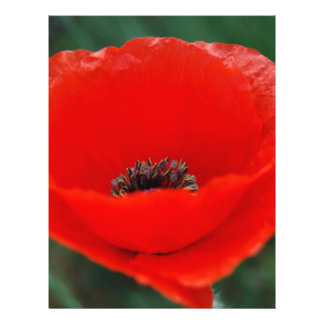 Red poppy and meaning flyer