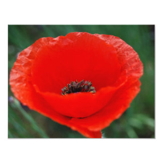 Red poppy and meaning personalized invites