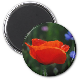 Red poppy and meaning magnets