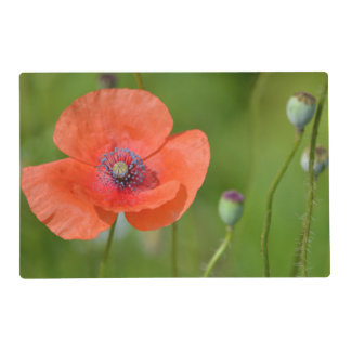 Red Poppy And Purple Flower Placemat