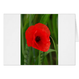 Red poppy card