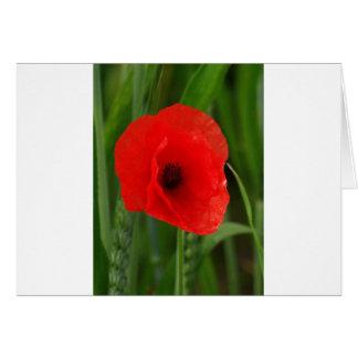 Red poppy cards