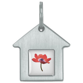 Red Poppy Closeup Pet Tag