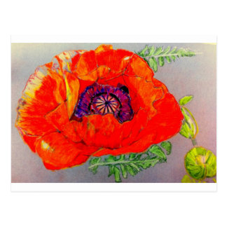 Red Poppy Drawing Cards