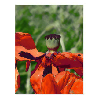 Red poppy faded postcard