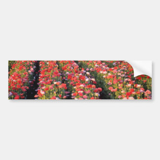 Red Poppy field flowers Bumper Stickers