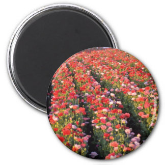 Red Poppy field flowers Refrigerator Magnets