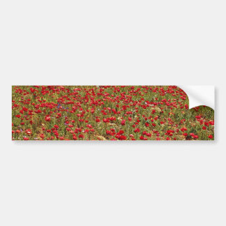 Red poppy field, Portugal  flowers Bumper Sticker