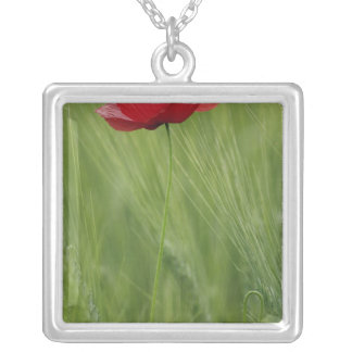 Red poppy flower among wheat crop, Tuscany, Silver Plated Necklace