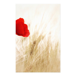 Red Poppy Flower in Field of Ripe Cereals Stationery