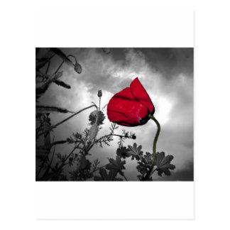 Red Poppy flower on Black and White Sky Postcard
