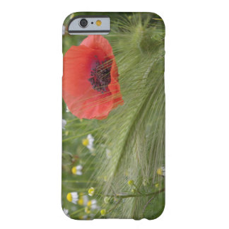 Red poppy flower, Tuscany, Italy Barely There iPhone 6 Case