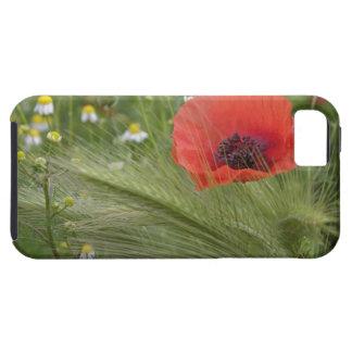 Red poppy flower, Tuscany, Italy iPhone SE/5/5s Case