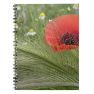 Red poppy flower, Tuscany, Italy Notebook