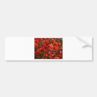 Red Poppy Flowers Bumper Stickers
