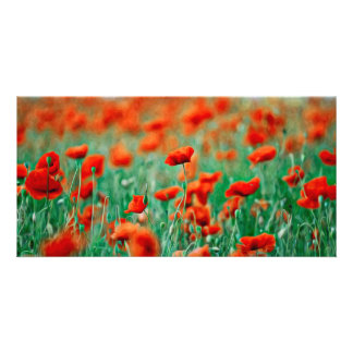 Red Poppy Flowers Photo Card Template