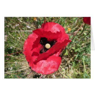 Red Poppy Friendship Card